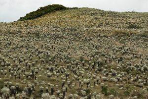 landscape frailejones ecuador