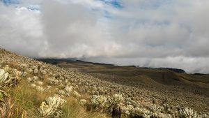 andean lanscape ecuador