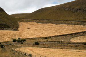 landscape andean ecuador