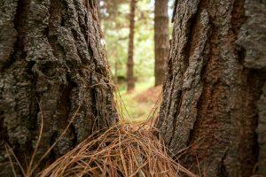 pino bosque ecuador camino fotografia tour