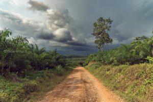 tormenta lluvia bosque humedo tropical ecuador