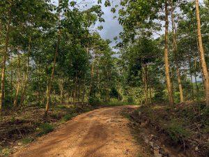 camino bosque tropical ecuador noroccidente pichincha