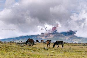 caballo salvaje andes ecuador
