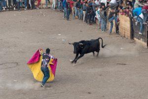 torero accion toro bravo