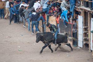 toros cayambe ecuador